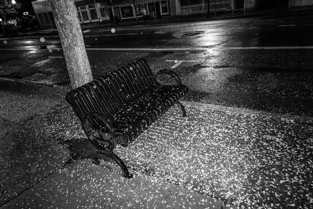 black iron street bench, street covered with flower pedals