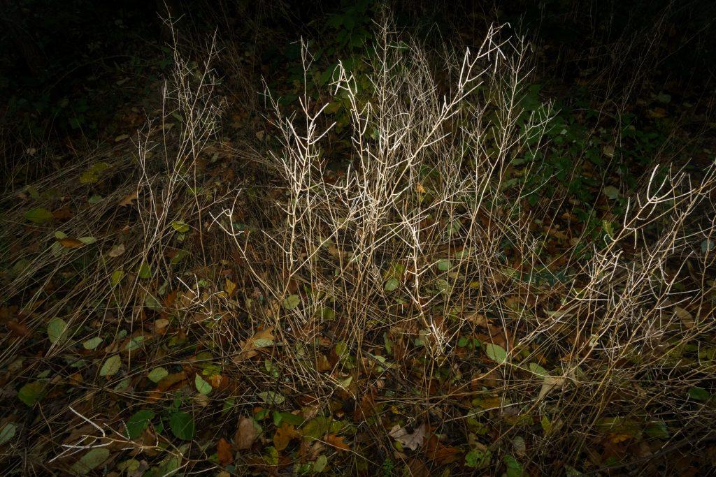 dried, dead shrub, night flash photo